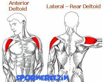 Omuz – Shoulder – Egzersizleri Genel Sıralaması ve Anatomisi