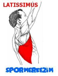 Sırt – Latissimus Egzersizleri Genel Listesi ve Anatomisi