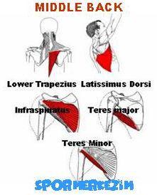 Orta Sırt – Middle Back Egzersizleri Genel Listesi ve Anatomisi