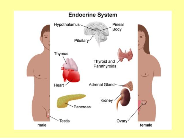 Hormonlarımız